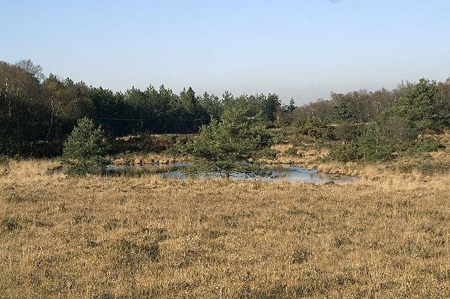 Heathland Pond near Great Ovens Hill, Dorset