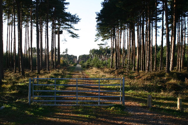 Forest track entrance to Roseisle forest