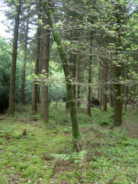 Managed woodland near Seven Ash Common