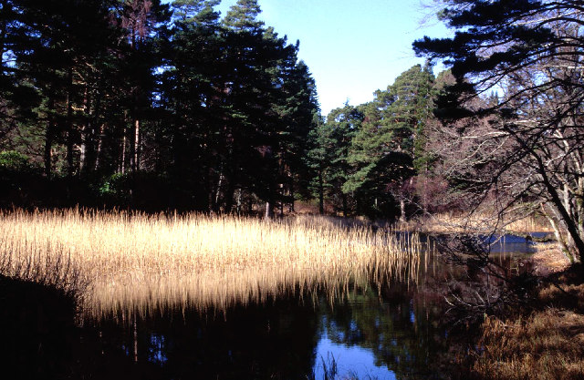 Pond with reeds at Glentanar house.