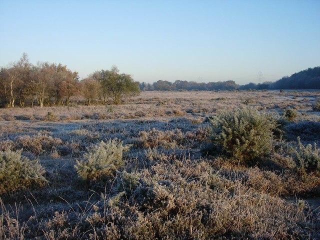 Frosty Heath