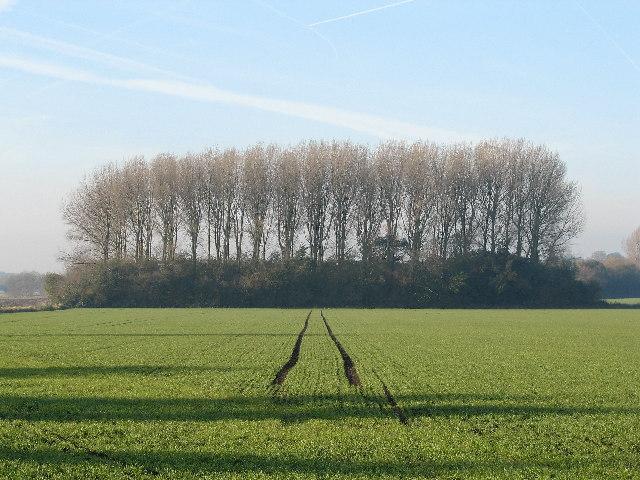 Lineham Plantation