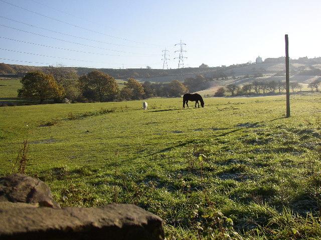 Pasture off Lower Edge Lane, Elland