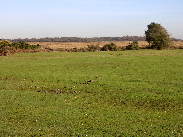 Grassed area at Leaden Hall, New Forest