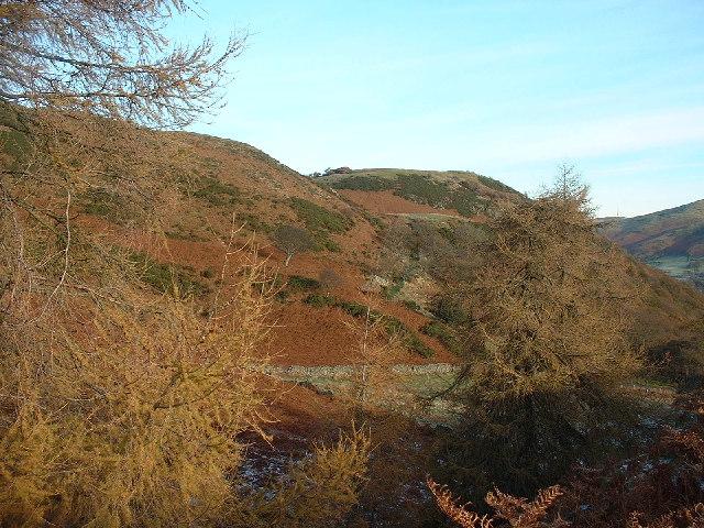 Dodd Wood