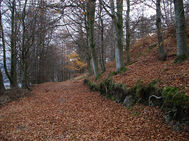 Woodland track at Knock Mary
