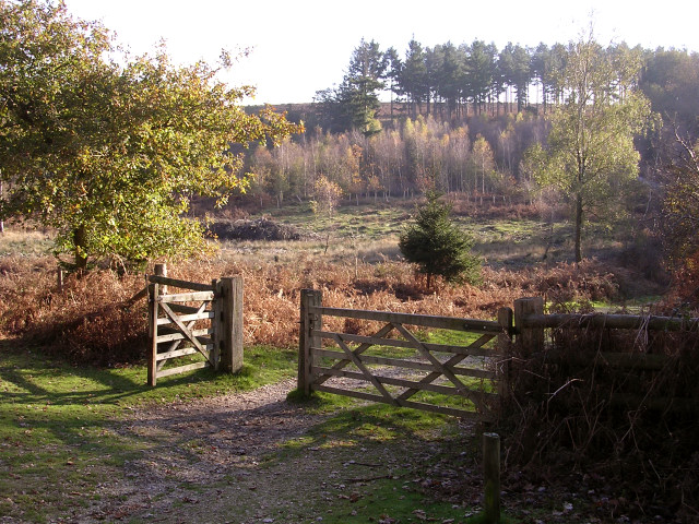 An entrance to the Pitts Wood Inclosure, New Forest