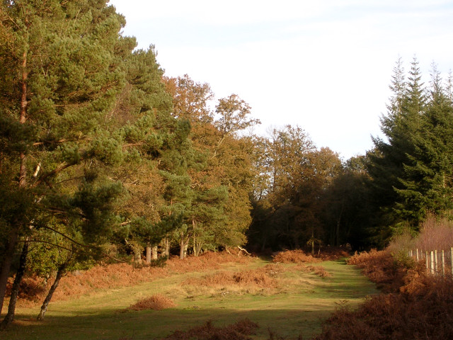 Driftway between Amberwood Inclosure and Sloden Inclosure, New Forest