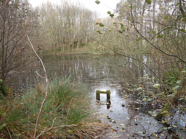 Puddock Pond in November