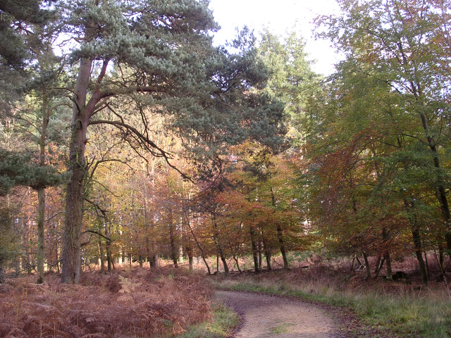 Sloden Inclosure, New Forest