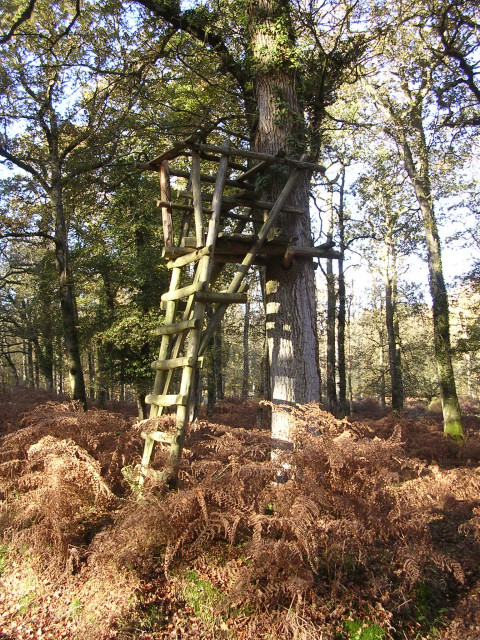 Lookout post in the Islands Thorns Inclosure, New Forest