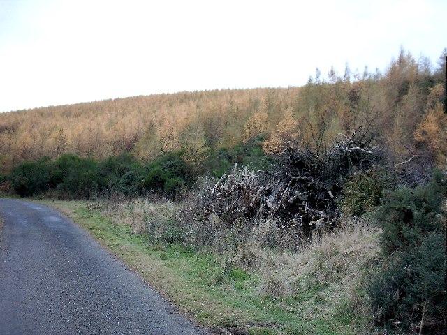 Wood near Rochelhill