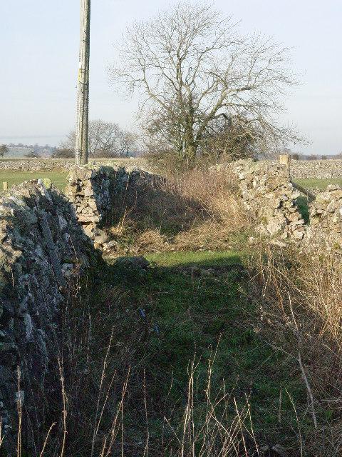 An Old Overgrown Lane