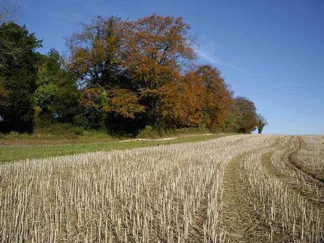 Sparsholt Road