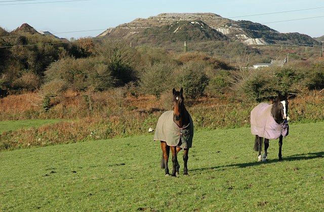 Horses near Carloggas