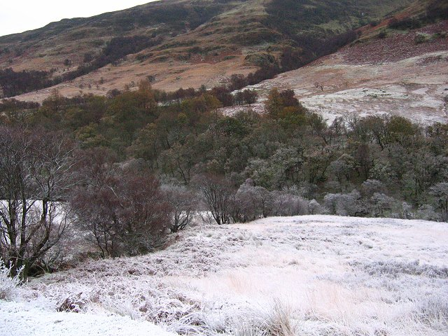 Woodland, Glen Douglas - Winter