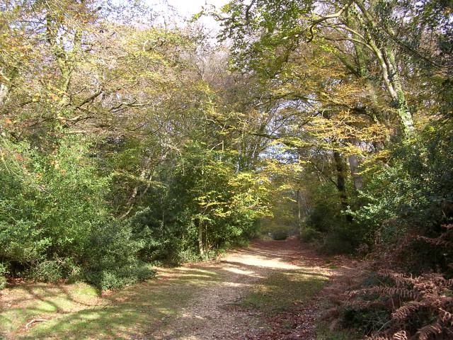Cut Walk, Lyndhurst Hill, New Forest