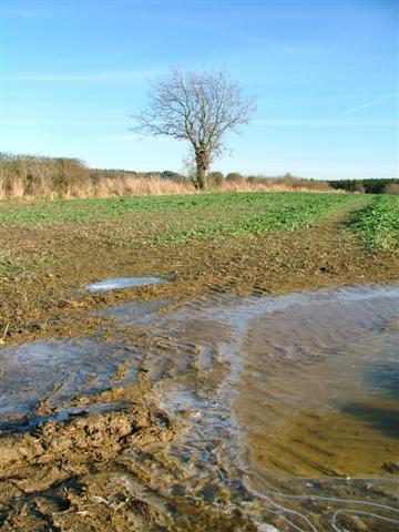 Arable Field,  south of Castle Hill Farm