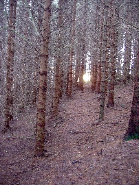 Wintry forest near Bryn Mawr
