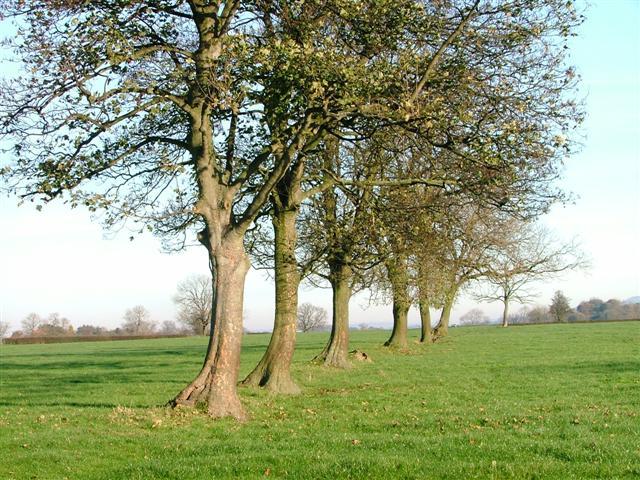 Old Hedgerow, Brompton Lane