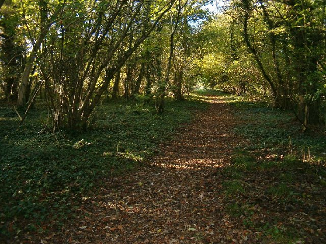 Woodland at Windmill Hill, Compton Dundon