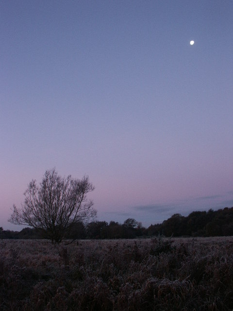 Dawn, Marston Marshes