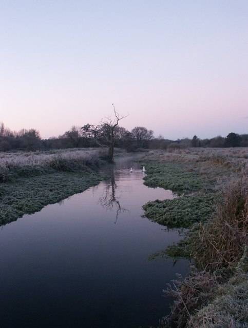 River Yare, Marston Marshes