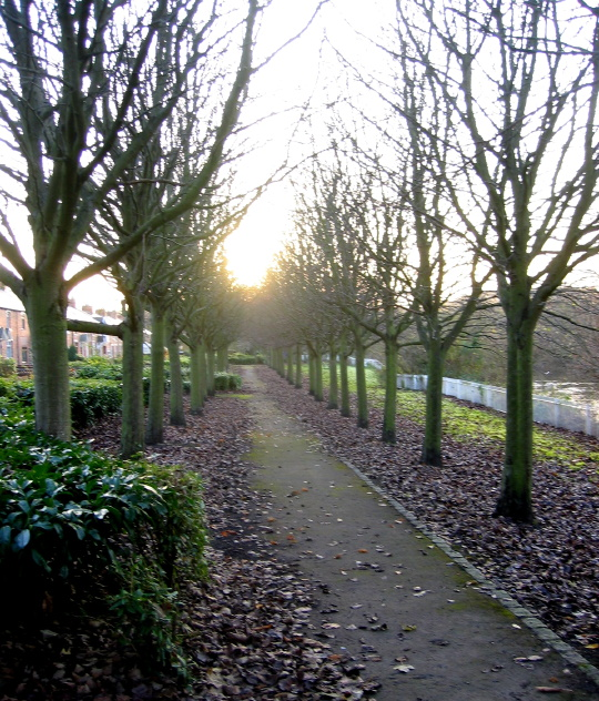 Tree-lined path on the south bank of the Wear