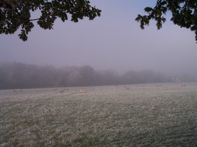 Mayall's Coppice in the mist
