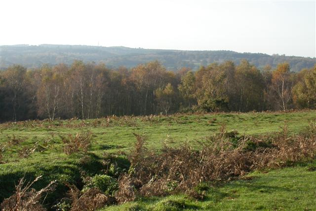 Puttenham Common