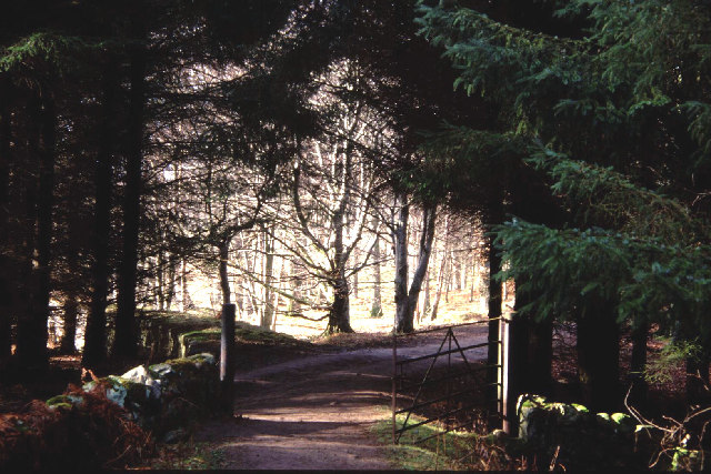 Gate in the Crathes woods
