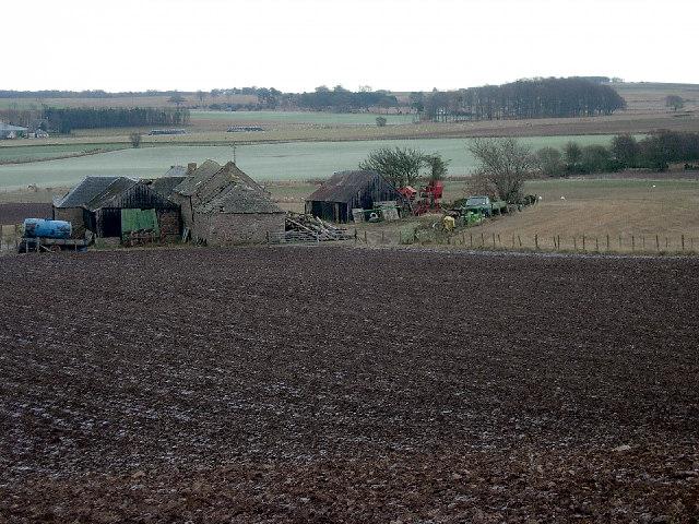 Cotton of Ovenstone farm