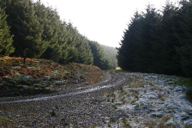 Forest road on Lady Cairn hill