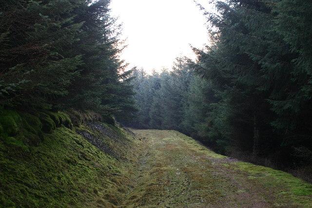 Forest track near Wellshot Hill