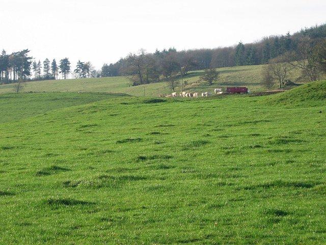 Cattle, Balthayock