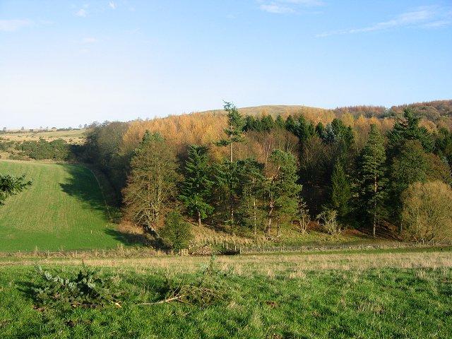 Balthayock Wood