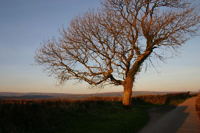 Tree near Higher Ley