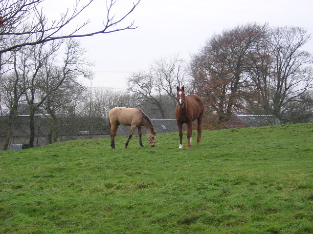 Horses Beside Crook Farm
