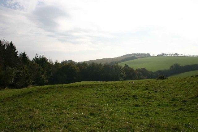 Along the edge of South Wood, near Heasley Mill