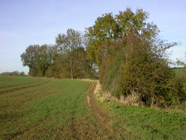Autumnal Hedge