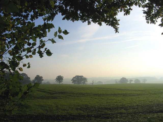 Early morning mist, Great Warley