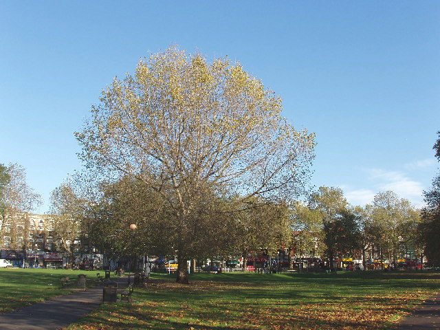 Trees on Shepherds Bush Common