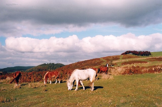 Ponies on Hopesay Common