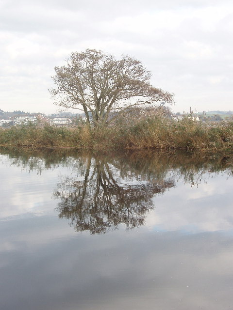 Tree and reflection, Exeter Canal