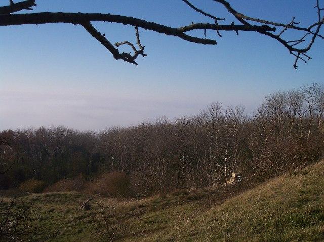Bushcomb Wood, Nottingham Hill