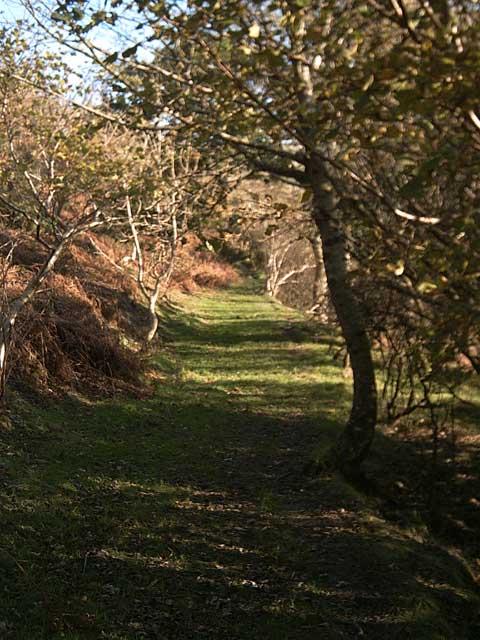 Bridleway: Oakridge Cleave