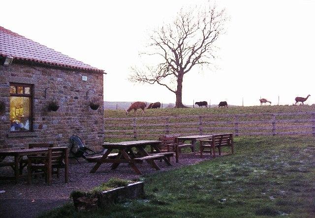 Mainsgill farmshop & tearoom