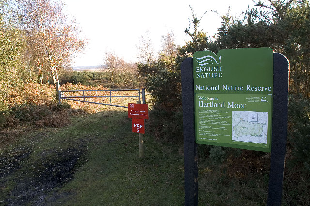 Hartland Moor NNR, Dorset