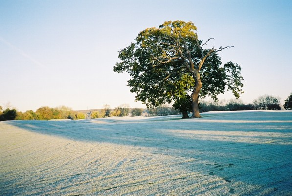 Frost and trees, Hennerton Golf Club