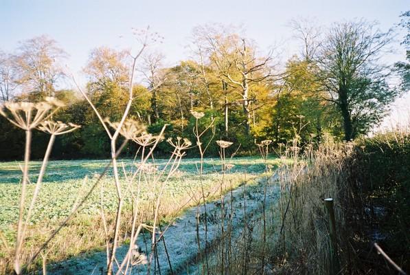 Rosehill Wood